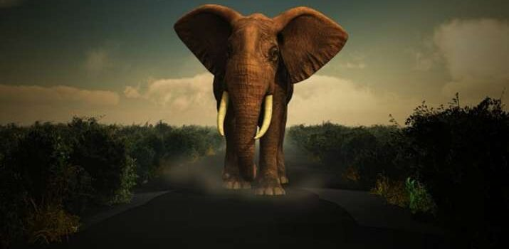 Vastu tips about elephant statues for home decoration: Vastu tips: keep elephant idols at home like this, love will grow in the married life of happiness and prosperity